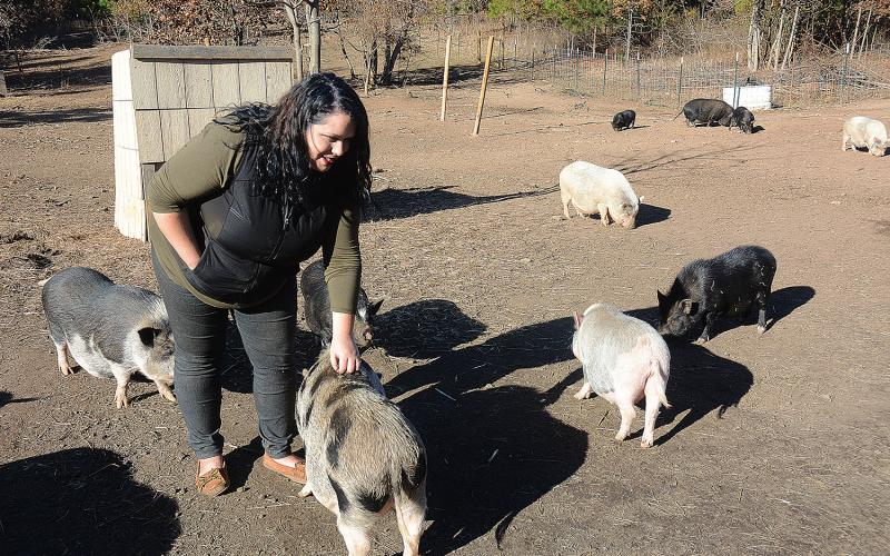 Corrine Baker pets pot-bellied pigs at Outsiders Farm and Sanctuary in Hart County, a farm where pigs originally bought as pets are rescued from bad situations.