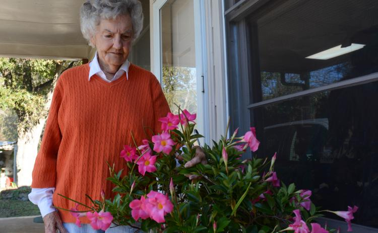 Sunshot by Michael Hall — Myra Cook looks at one of her blooming mandevillas at her home in Hartwell recently.