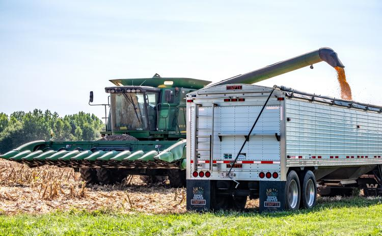Sunshot from file by Bill Powell - Hart County farmer David King and his crew harvest corn on Labor Day in Hart County.