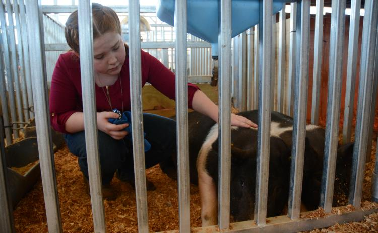 10-year-old Emma Bennett, of Stephens County, pets her pig named Killing Me Softly.